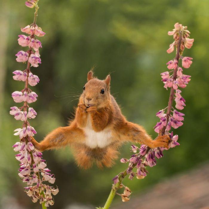 fotos más divertidas de animales