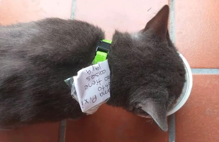 Descubre que su gato llevaba una doble vida gracias al collar