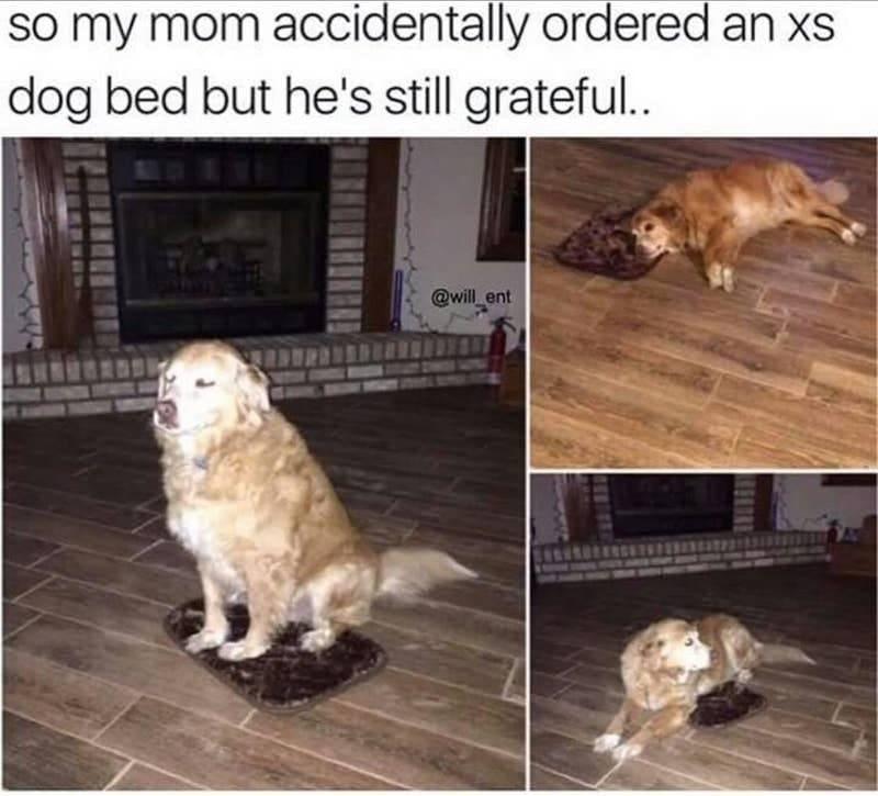 no nos merecemos a los perros