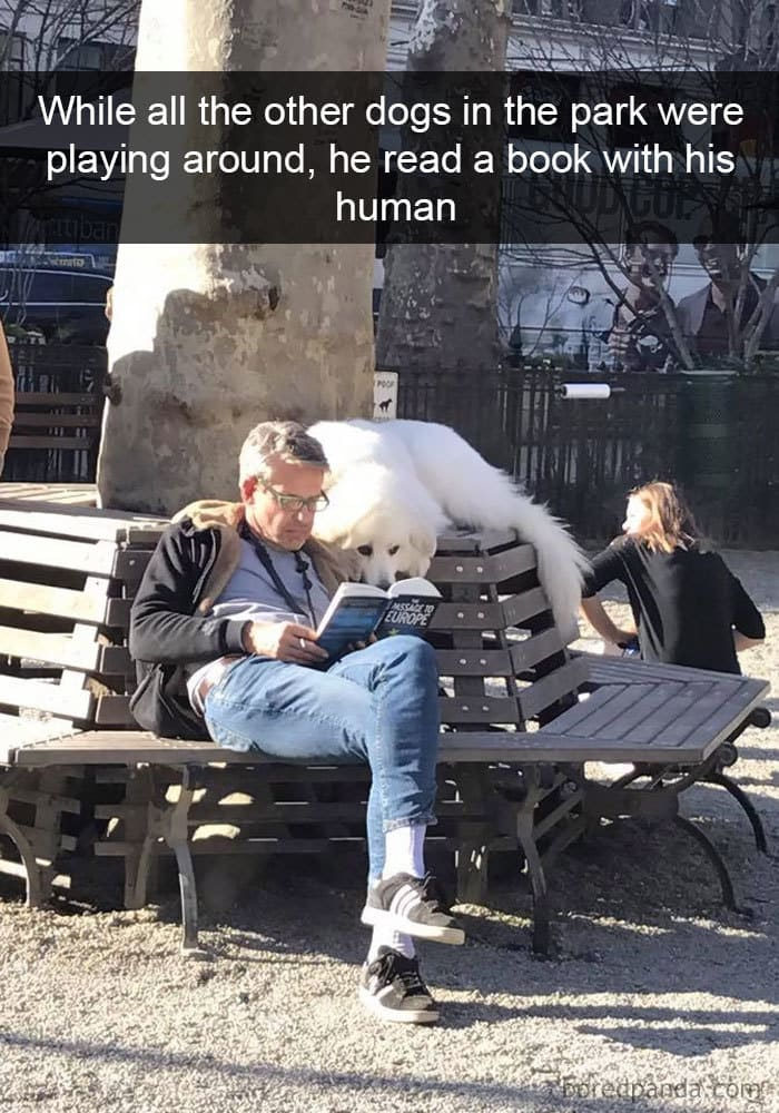 perro leyendo en el parque