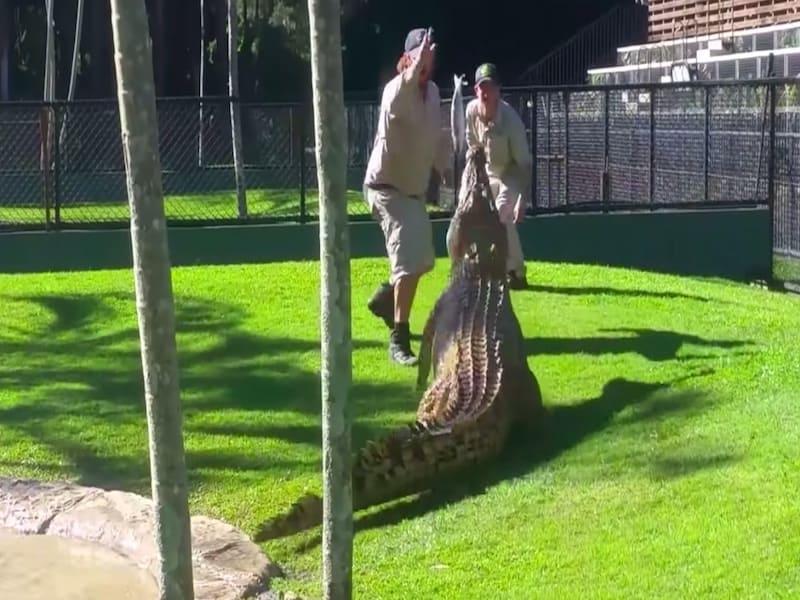 Hasta ir al zoo tiene peligro de vez en cuando