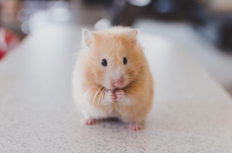 14 vídeos que te harán querer una mascota