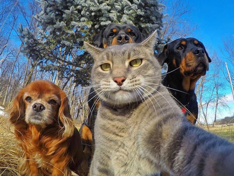 gatos sacándose una foto